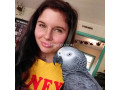 african-grey-parrot-ready-for-adoption-small-0