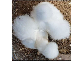 Silkies 10 piece