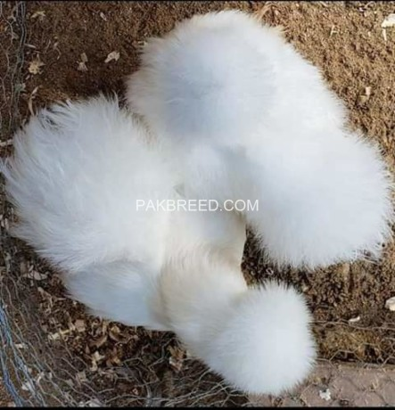 silkies-10-piece-big-3