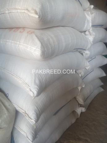 maize-glotan-rafhan-30-big-1