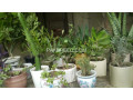 potted-plants-small-0