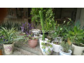 potted-plants-small-1