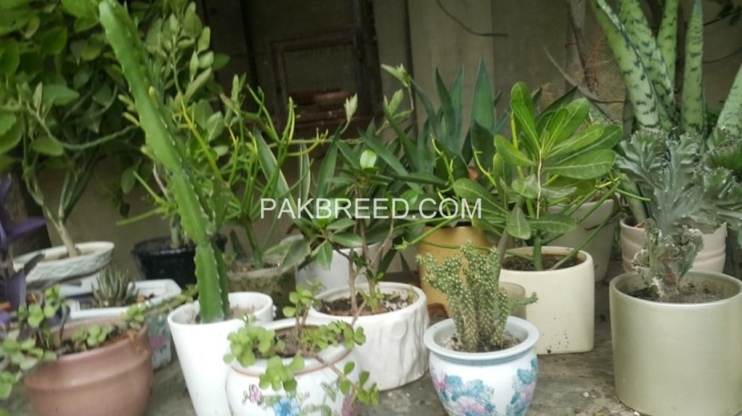 potted-plants-big-0