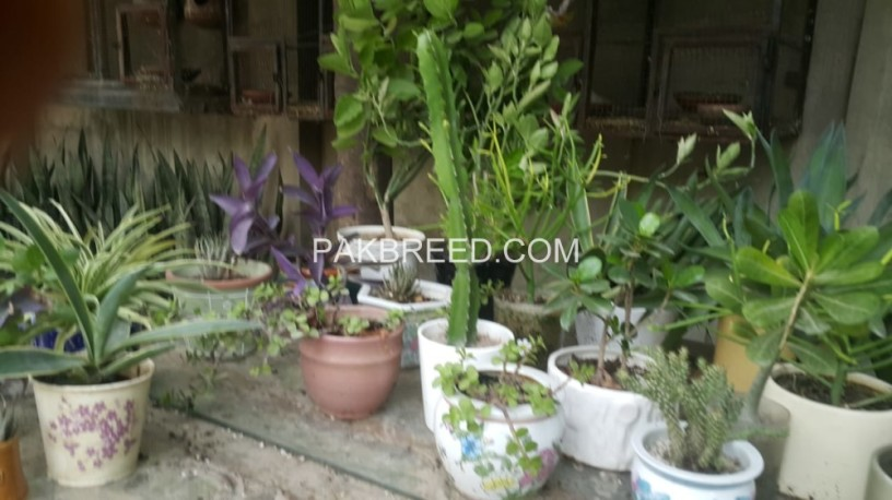 potted-plants-big-1