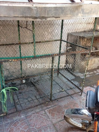 colony-cage-for-sale-big-1