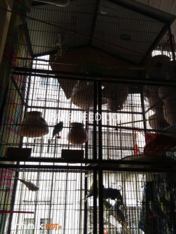 five-portion-cage-available-for-sale-big-2