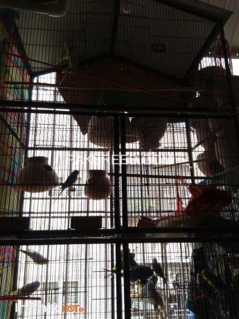five-portion-cage-available-for-sale-big-1