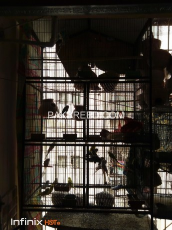 five-portion-cage-available-for-sale-big-0