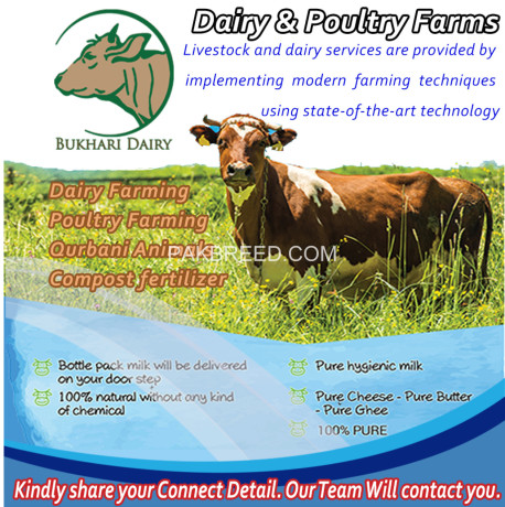 Dairy Farming Poultry Farming Qurbani Animals Compost
