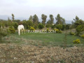 a-white-female-horses-for-sale-in-haripur-small-1