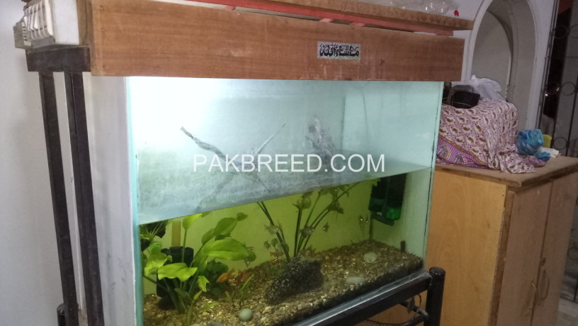 aquarium-sale-big-2