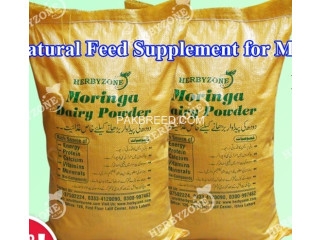 Moringa Dairy Powder