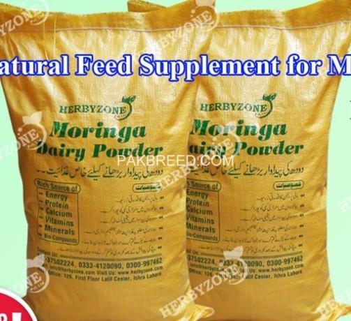 moringa-dairy-powder-big-0