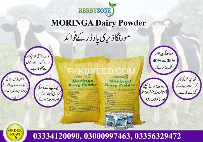 moringa-dairy-powder-big-9