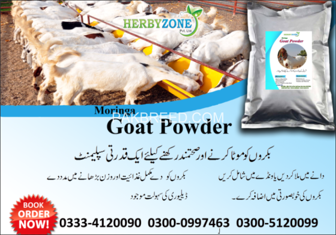 moringa-goat-powder-big-0