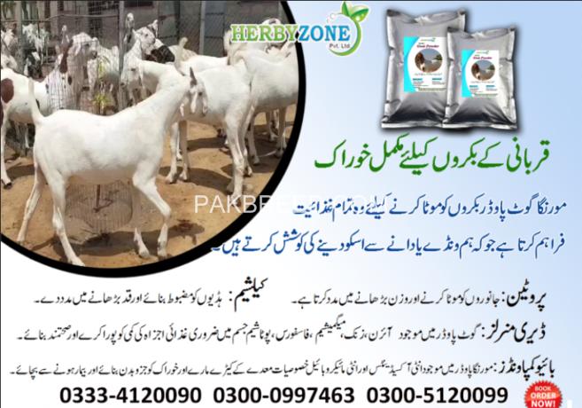 moringa-goat-powder-big-3
