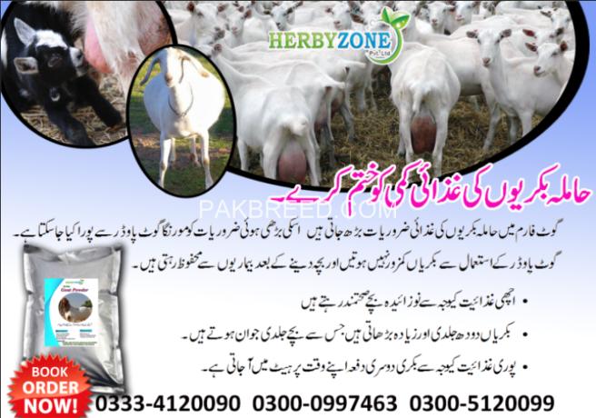 moringa-goat-powder-big-7
