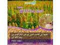 quinoa-seeds-small-1