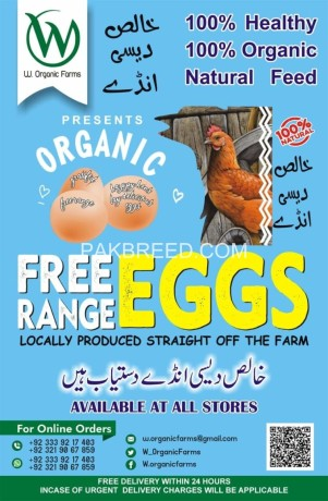 organic-eggs-pack-of-6-big-0