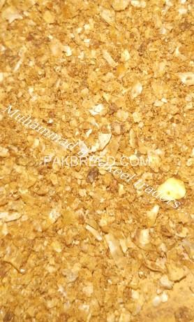 maize-gluten-big-1