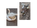 lambi-gardan-wali-duck-and-dasi-duck-small-0