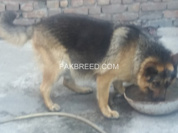 gsd-looking-for-new-home-big-1