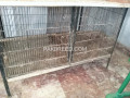 parrott-cage-iron-small-0