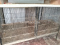 parrott-cage-iron-small-4