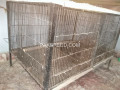 parrott-cage-iron-small-2