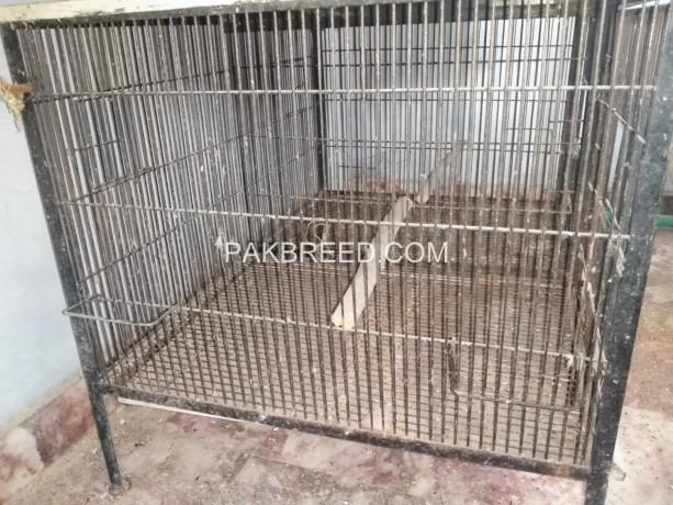 parrott-cage-iron-big-1