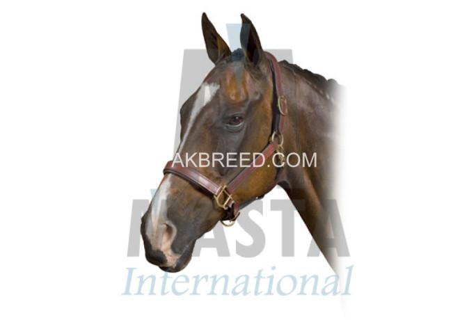 horse-halters-big-2