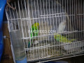 healthy-and-active-birds-small-0