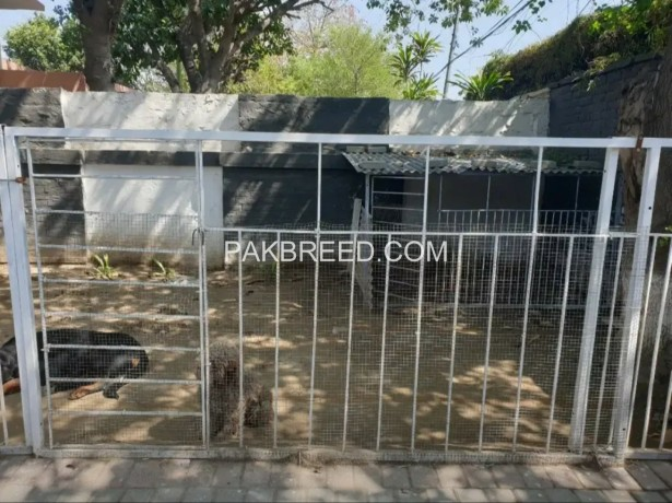 foldable-solid-iron-dog-cage-for-large-breed-dogs-big-2
