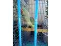 raw-parrot-small-1