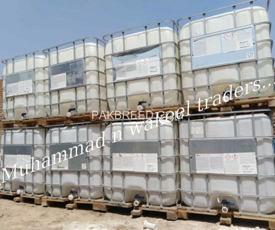 molassesshyrarab-big-1