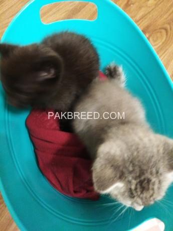 kittens-big-1
