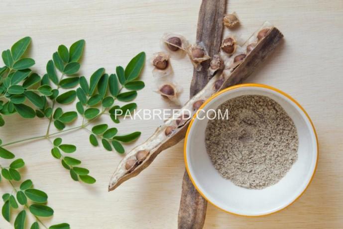 moringa-fodder-seeds-big-1