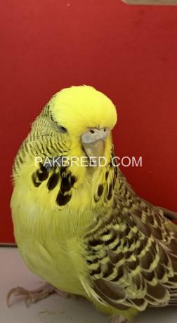 exhibition-uk-line-birds-big-3