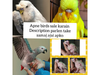 Apne birds sale YouTube par upload description lazmi padhen