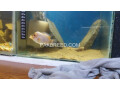 2ft-aquarium-with-fishes-small-2