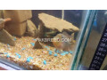 2ft-aquarium-with-fishes-small-1