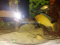 2ft-aquarium-with-fishes-small-4