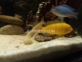 2ft-aquarium-with-fishes-small-3
