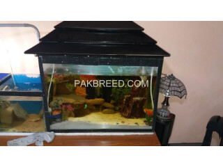 2ft AQUARIUM WITH FISHES