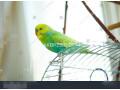 rainbow-working-birds-small-0