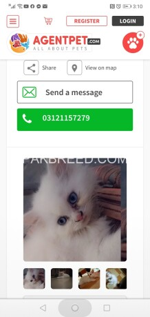 parshin-cats-big-4