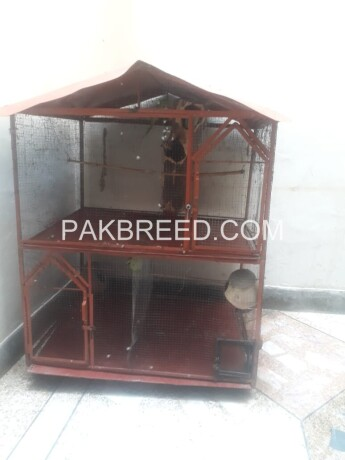 4x4-ft-iron-cage-main-2xportion-further-devided-in-4-portions-with-moving-tyres-with-natural-environment-given-to-birds-03129108788-big-2