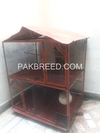 4x4-ft-iron-cage-main-2xportion-further-devided-in-4-portions-with-moving-tyres-with-natural-environment-given-to-birds-03129108788-big-1