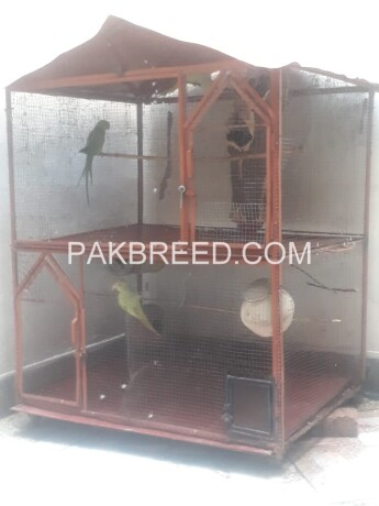 4x4-ft-iron-cage-main-2xportion-further-devided-in-4-portions-with-moving-tyres-with-natural-environment-given-to-birds-03129108788-big-0
