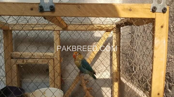 parrot-fisher-big-1